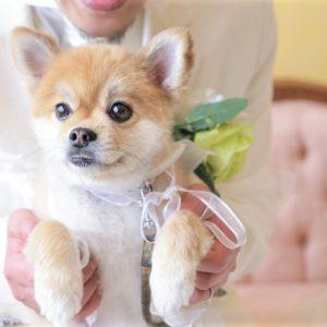 【ワンコと一緒に結婚式】おめでとうございました!